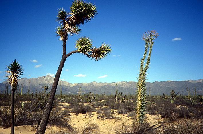paysage Basse Californie