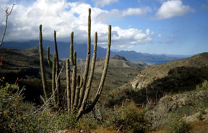 paysage de cactus Basse Californie
