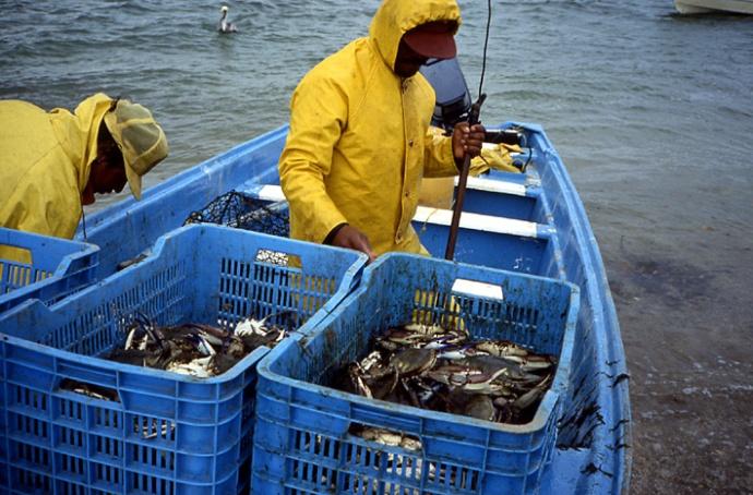 pecheurs de crabes Basse Californie