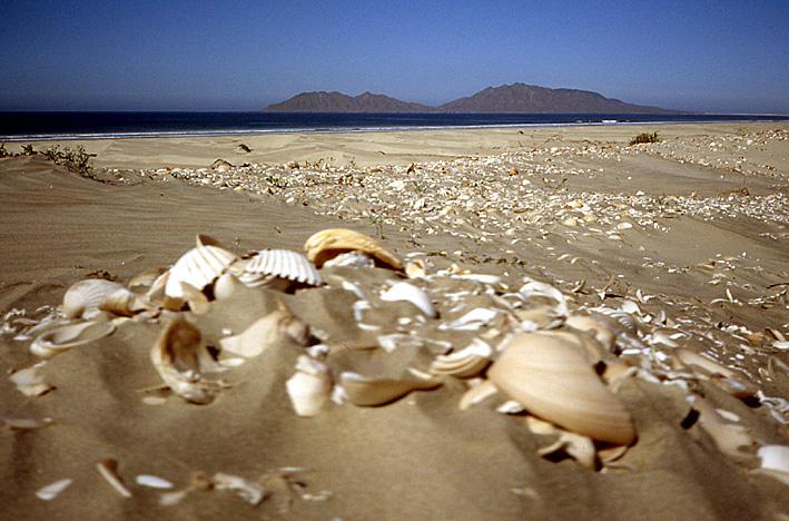 plage coquillages Basse Californie