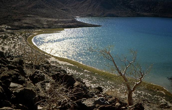 plage pacifique Basse Californie