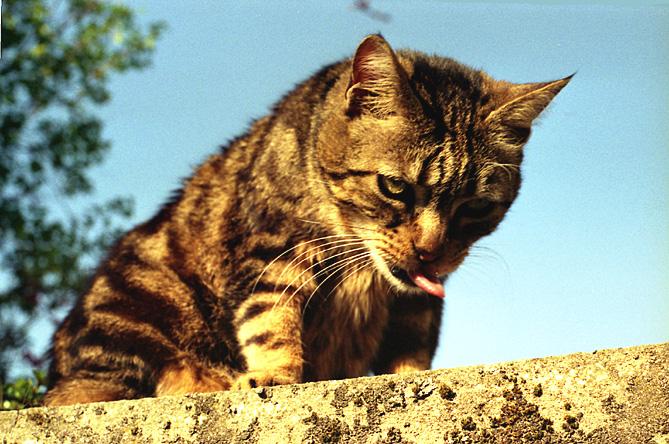 Noir chatte ruisselant