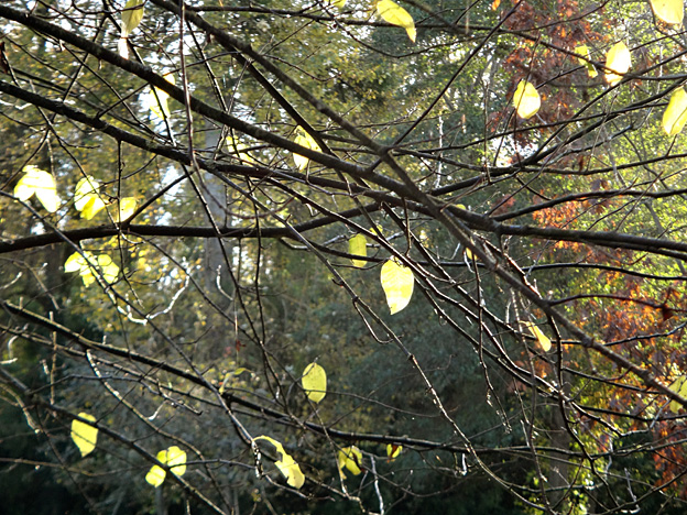 automne-feuilles-jaunes