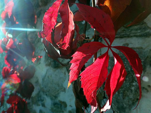 automne-feuilles-rouges