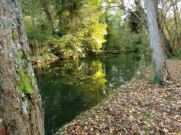 automne-riviere