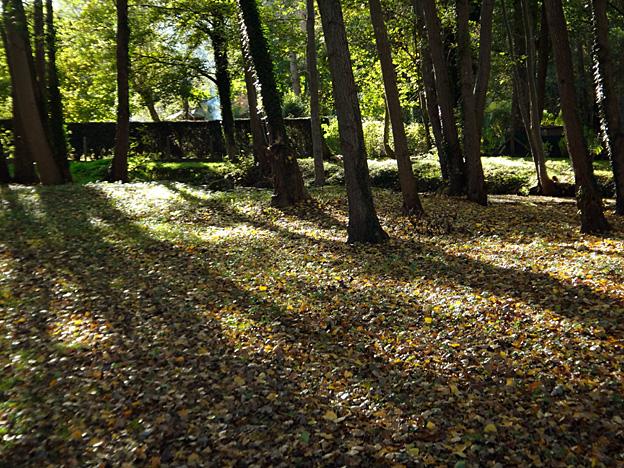 automne-sous-bois