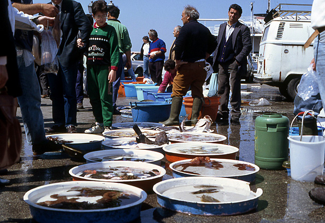 pouzzoles-poissons-sur-le-port