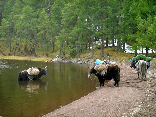 La Mongolie, d'Oulan Bator à l'empire des steppes ; le monde des chevaux 60