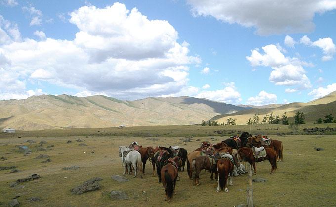 La Mongolie, d'Oulan Bator à l'empire des steppes ; le monde des chevaux 48