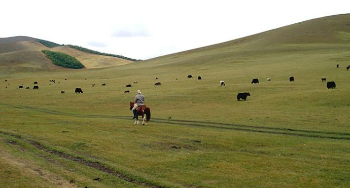 La Mongolie, d'Oulan Bator à l'empire des steppes ; le monde des chevaux 55