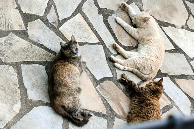 chat libertin gratuit sans inscription tres tres jeune salope