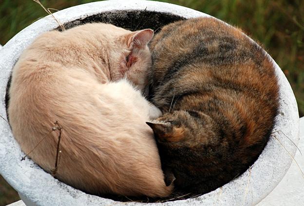 Les amateurs de chatte serrée